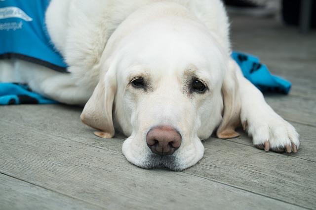 Les croquettes pour chien vendues chez les vétérinaires